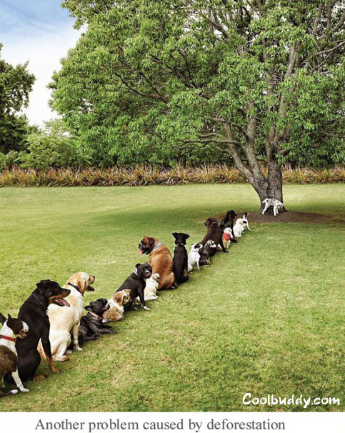 Another-problem-caused-by-deforestation