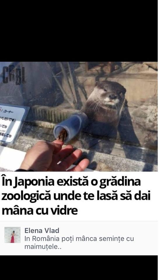 maimute